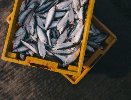 UK-EU Summit: Fishy